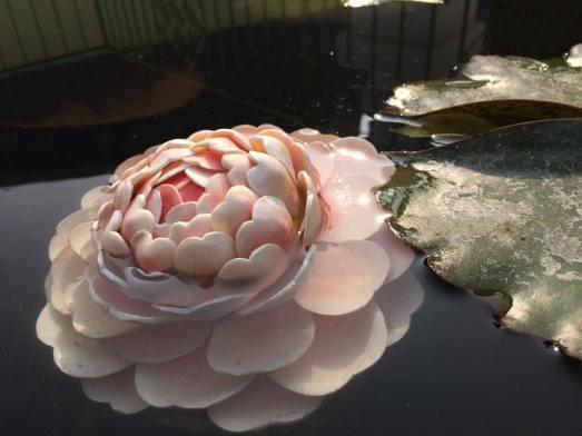 Wax butter lotus flower.